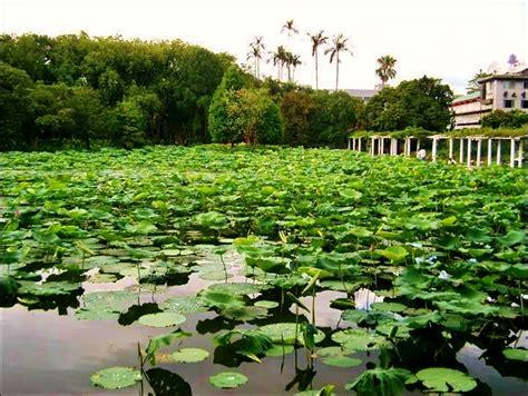 Taipei Botanical Garden Taipei Botanical Garden Taiwan Pinterest