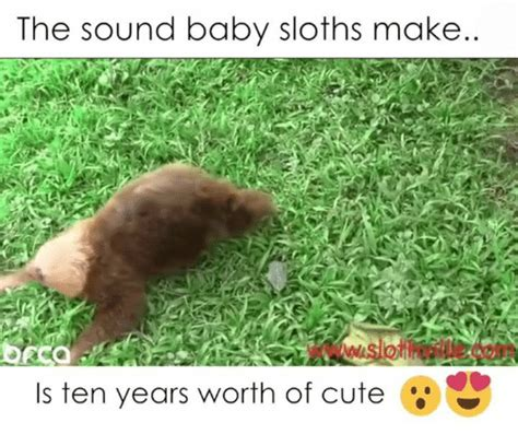 Baby Sloth Meme - the sound baby sloths make is ten years worth of cute