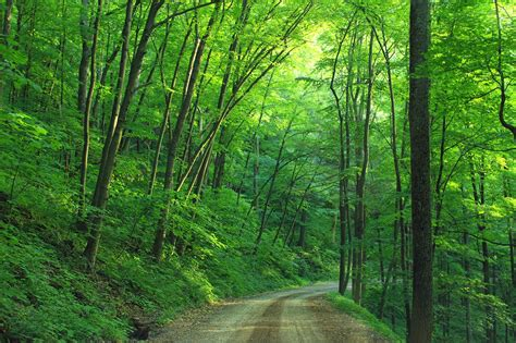 loyalsock state forest pennsylvania usa hd wallpaper