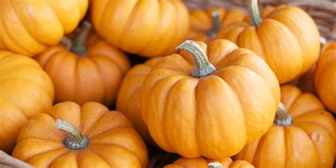 5 surprising uses for pumpkin none of which are lattes