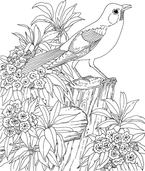 Bird Coloring Pages For Adults birds coloring pages