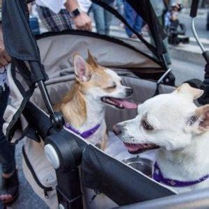 ufficio tutela animali torino animali cittadini i diritti di e gatto repubblica it