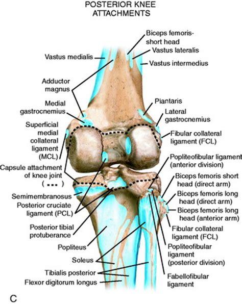 Similiar Knee Joint Bones And Landmarks Keywords