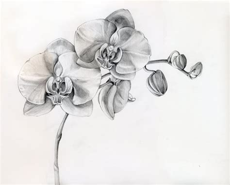 Orchid Tattoo Black And Grey   30 awesome orchid tattoos designs