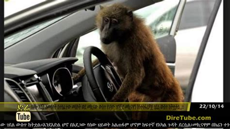 driver baboon   car accident  ethiopia youtube