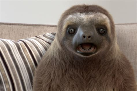 sloth on a couch 163 10m investment to bolster sofology furniture news magazine