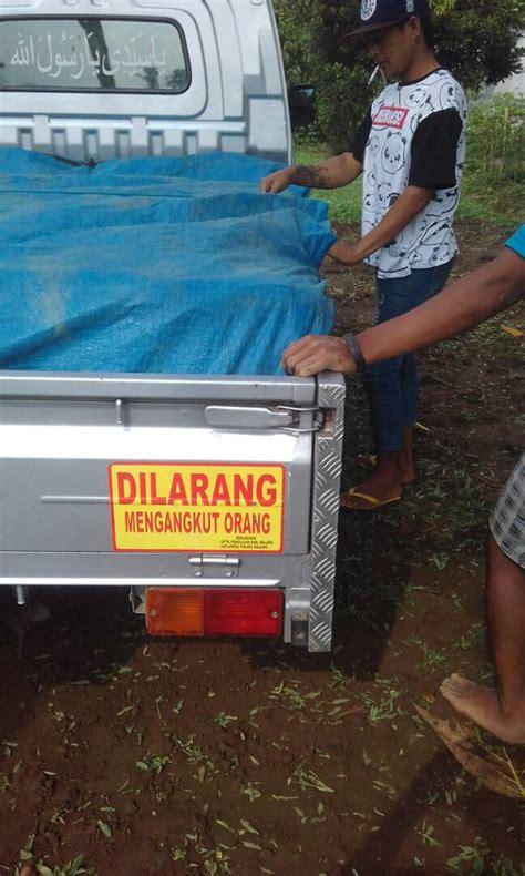 Jual Bibit Cabe Di Malang suplay rumput gajah mini di batu malang jual rumput