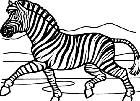 printable coloring page of a zebra printable zebra coloring page from freshcoloring free