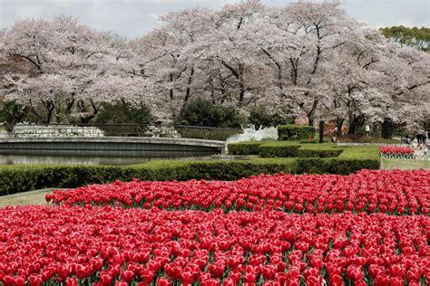 beautiful gardens in the world beautiful kyoto gardens japan world for travel