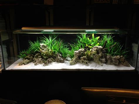 mbuna aquascape african cichlid scape uk aquatic plant society