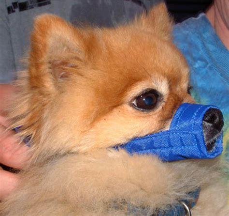 muzzle for small dogs muzzle store standard cloth muzzle