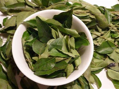 Tanaman Bumbu Daun Kari manfaat daun kari untuk kesehatan tips dokter cantik