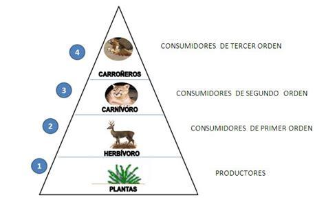 cadena alimenticia quienes son los productores educando el portal de la educaci 243 n dominicana