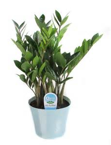 No Light Plants Indoor Flower Plants Low Light Viewing Gallery