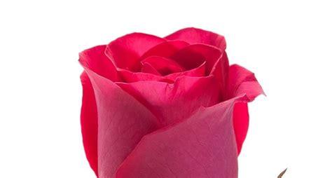 colore dei fiori significato rosa colore significato significato fiori significato