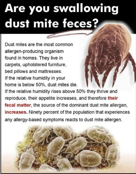 dust mites in bed dust mite treatment mattress cleaning adams carpet cleaning