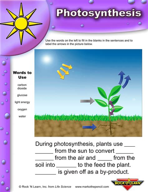 Photosynthesis Worksheet photosynthesis worksheets for elementary classrooms