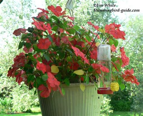 Hummingbird Flower Garden Hummingbird Flower Garden All The Resources To Succeed