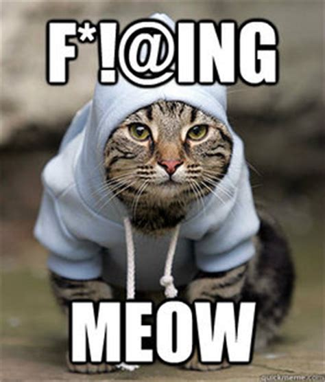 Happy Kitten Meme - happy kitty memes