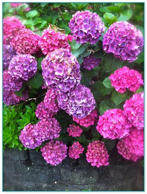 year  plants  flowers home improvement