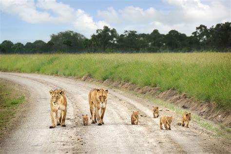 4 day masai mara nakuru air safari from watamu malindi