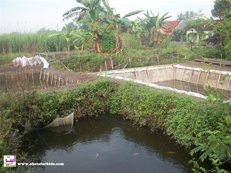 Benih Ikan Gurame Yang Baik cara perawatan benih ikan gurame benih ikan jogja