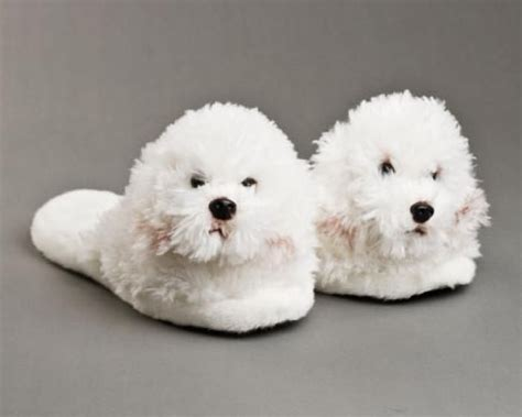 house shoes for dogs best 25 bichon frise ideas on pinterest bichons cute small dog breeds and baby maltese