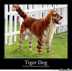 Tiger Memes - tiger dog by mcmahnigle meme center