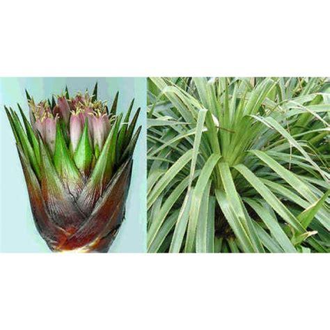 buy tropical plants buy tropical indoor plants seeds