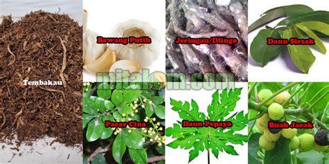membuat zpt nabati gambar tumbuhan bahan pestisida nabati i mitalom