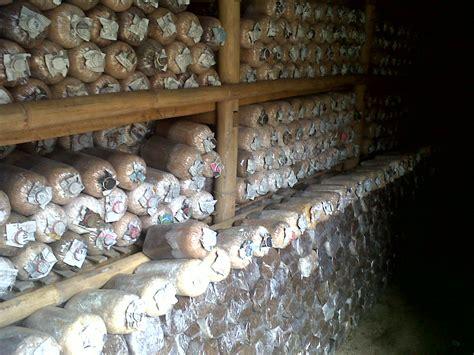 Jual Bibit Jamur Tiram Wonosobo karya petani jamur jual jamur tiram bibit baglog alat