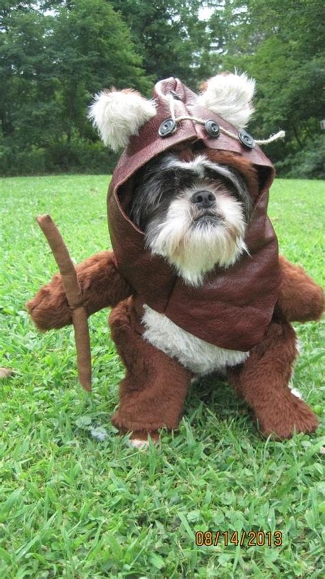 ewok costume for ewok costume for boo