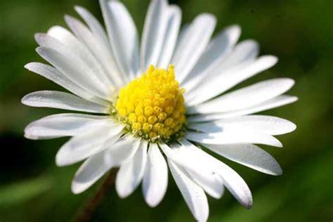 all best picos poze desktop flori buchete de flori poze frumoase 100 imagini superbe cu peisaje din natura