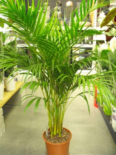 indoor plants    grow   house