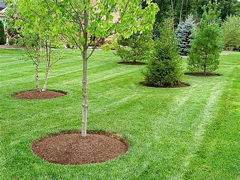 landscape maintenance services powered lawn service in colonial heights va find htonroads