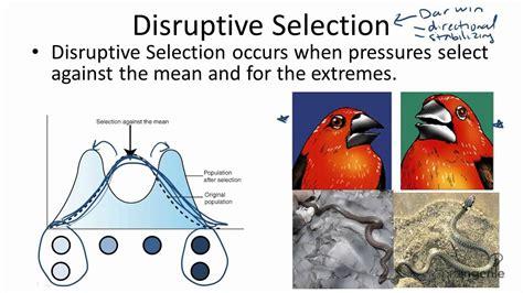 12 3 2 disruptive selection youtube