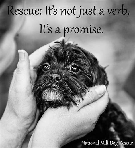 rescue quotes rescue quotes quotesgram