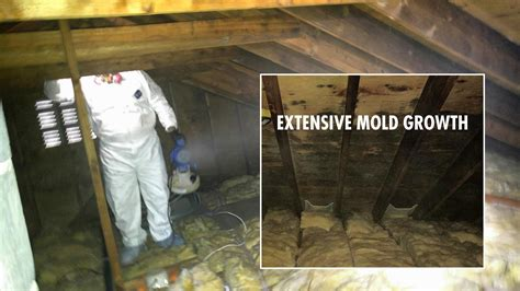 buying a house with mold in attic mold removal remediation contractor in farmingdale nj attic mold basement mold