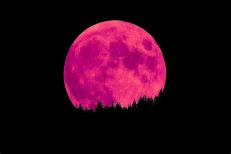 pink moon pink moon will light up the night tonight but don t be