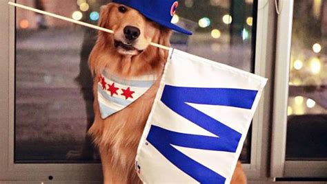 dog names for chicago cubs fans the top dog names in san francisco rover com