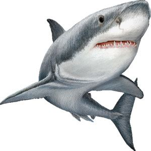 Great White Shark Clip shark clip images clipart panda free clipart images