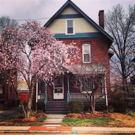 beautiful trees for front yard beautiful cherry blossom tree in the front yard