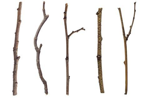 and sticj image gallery stick tree