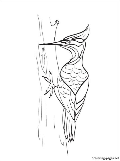 wood pecker coloring coloring pages