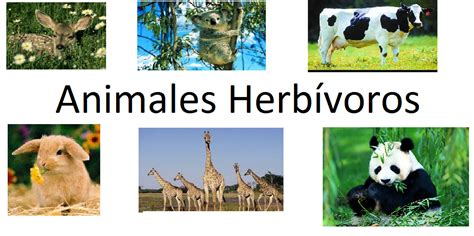 imagenes de animales herbivoros y carnivoros los animales caracter 237 sticas animales herb 237 voros