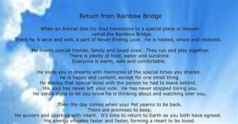 animal life  death pet afterlife animal soul heaven