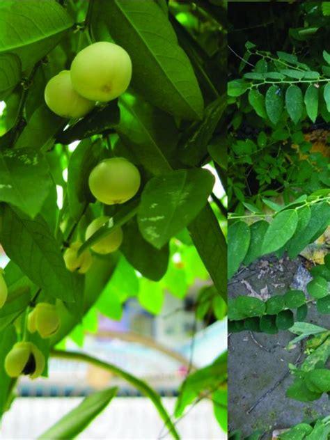 tanaman  bisa dimanfaatkan sebagai ramuan obat