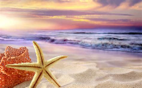 starfish wallpaper allwallpaperin  pc en