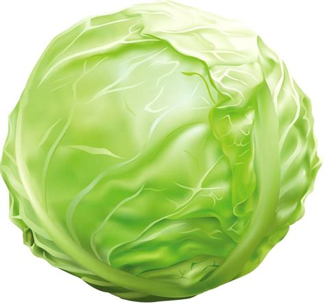 Cabbage Clipart 263 best images about vegetable clip and photos on