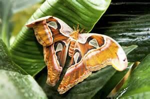 jardin des papillons grevenmacher